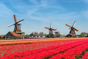ogloszenia pracy z holandii 2018